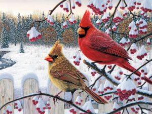 Cardinal Birds in a Winter scene